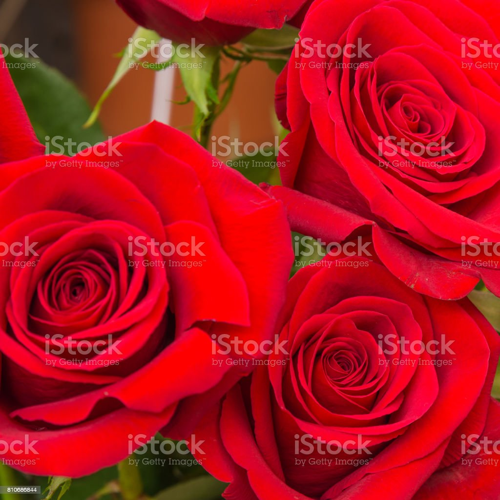 Beautiful floral royalty-free stock photo