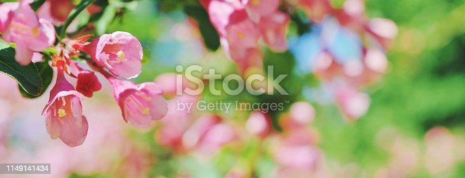istock Beautiful floral spring abstract background of nature Branches blossoming flower macro, soft focus background Easter and love greeting cards, copy space Wonderful spring pink violet flowers tree bunch 1149141434