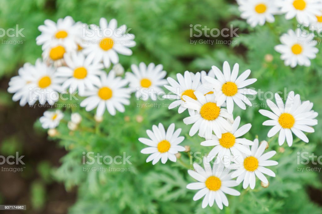 Beautiful Flower And Green Leaf Background In Flower Garden At Sunny