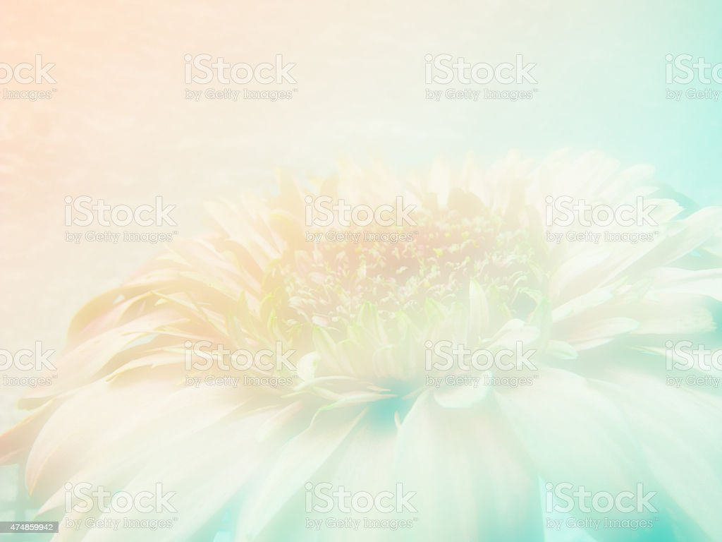 Beautiful Flower Background Flowers Made With Color Filters Stock