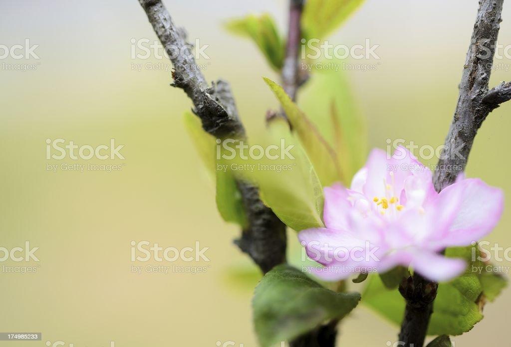 Beautiful flower background royalty-free stock photo