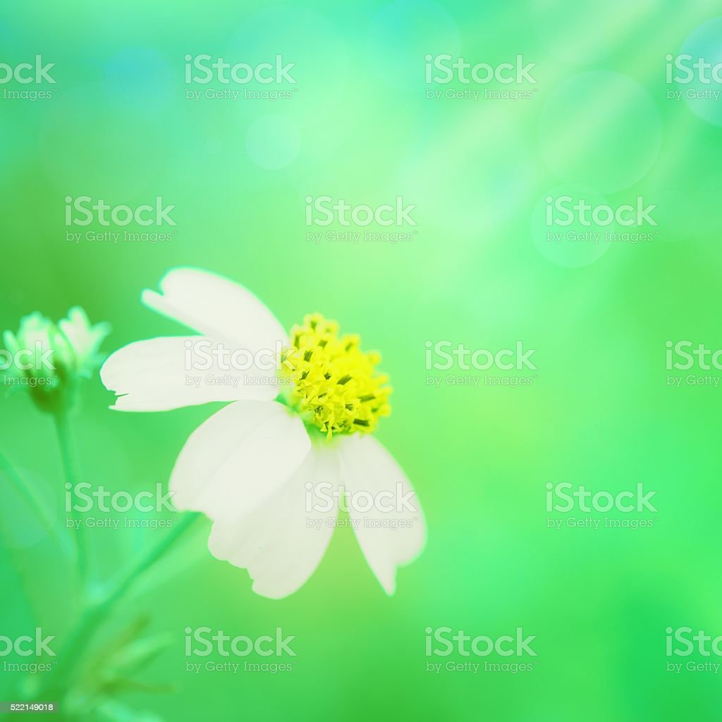 Beautiful Flower Background Stock Photo More Pictures Of