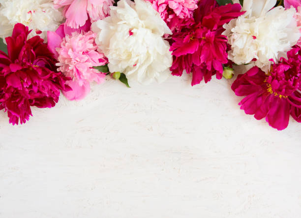 beautiful flower background with peony flowers - mothers day stock pictures, royalty-free photos & images
