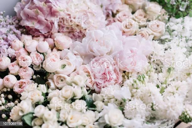 Beautiful flower bed of fresh peonies roses hyacinths hydrangeas in picture id1075065156?b=1&k=6&m=1075065156&s=612x612&h=n qdbrakt4cp9xwxenr1zz3rkhasjfebkcz2q4b56ou=