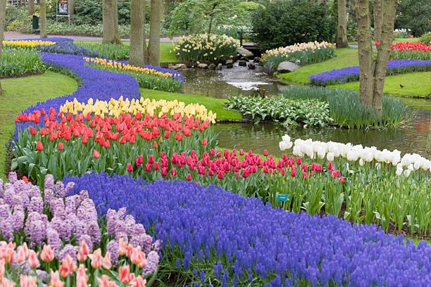 belas cerâmicas de tulipas cama de flor no parque (xxl - jardim do eden - fotografias e filmes do acervo