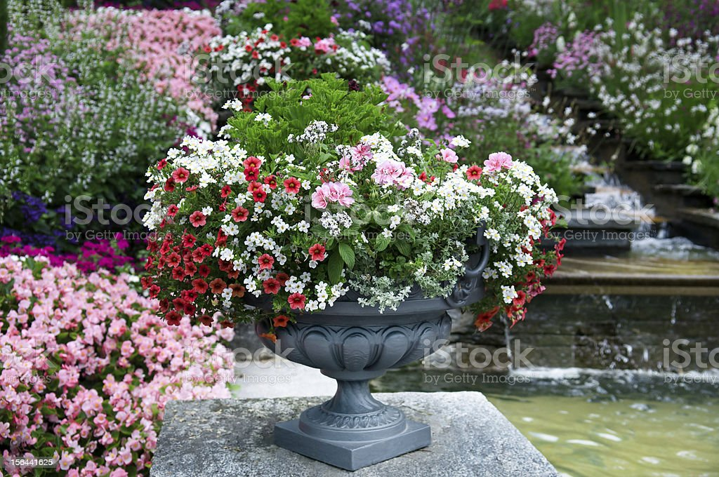 Beautiful flower bed royalty-free stock photo