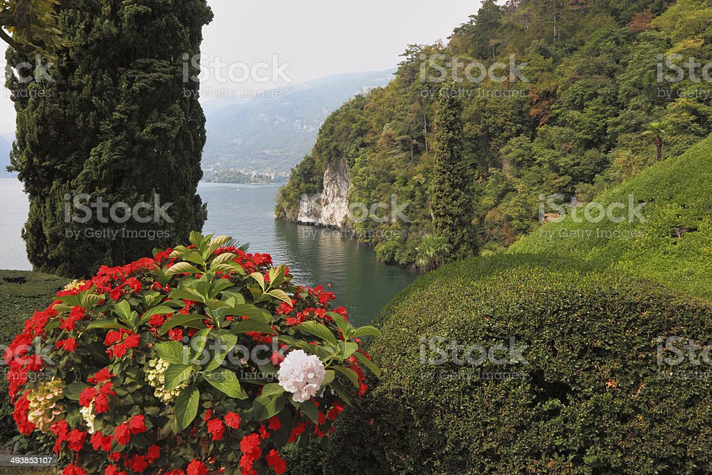 Beautiful flower bed stock photo