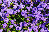beautiful flower bed with purple flowers