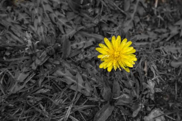 Schöne Blume zwischen toten Pflanzen. Das Leben unter extremen Bedingungen Konzept. – Foto