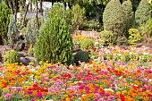 Beautiful flower decoration in the garden.