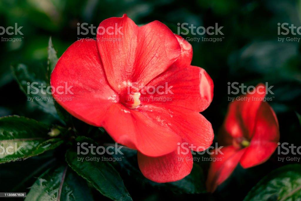 Beautiful Flower, Exotic Flower and Wonderful Flower, Mae Fah Luang...