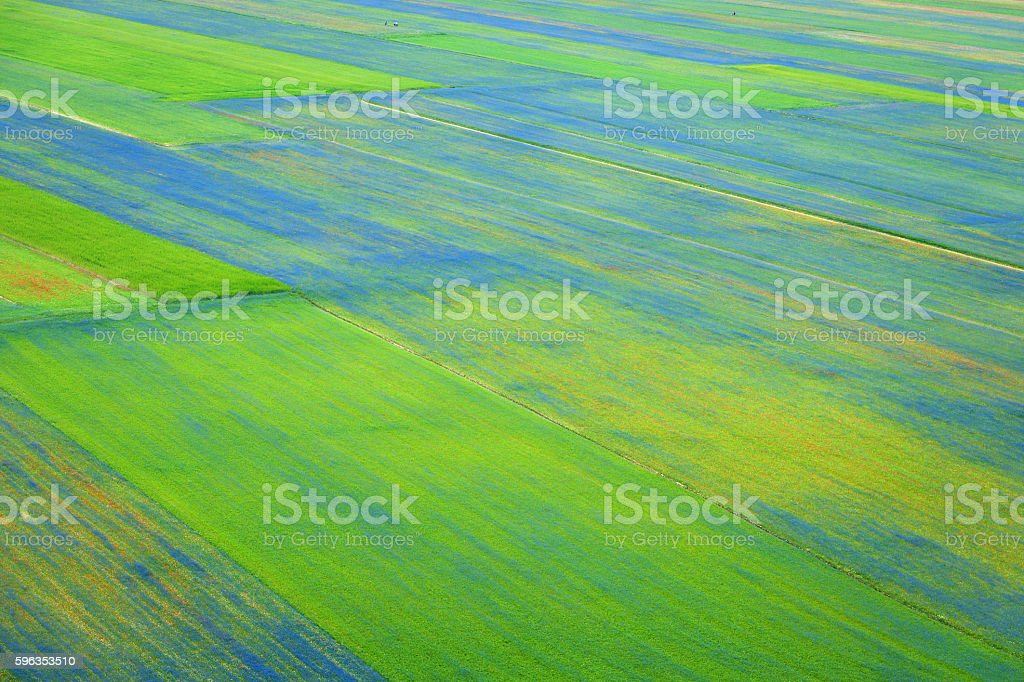 Beautiful Flower Field, Castelluccio, Umbria, Italy royalty-free stock photo