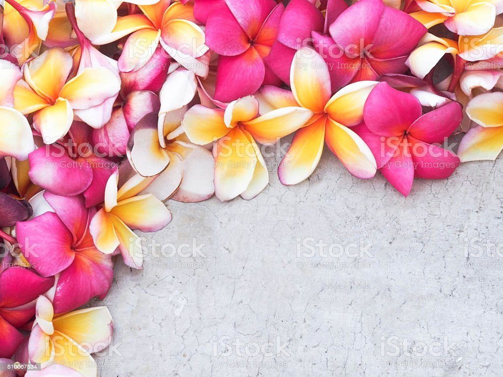 Beautiful Flower Frame Use As A Background Stock Photo More