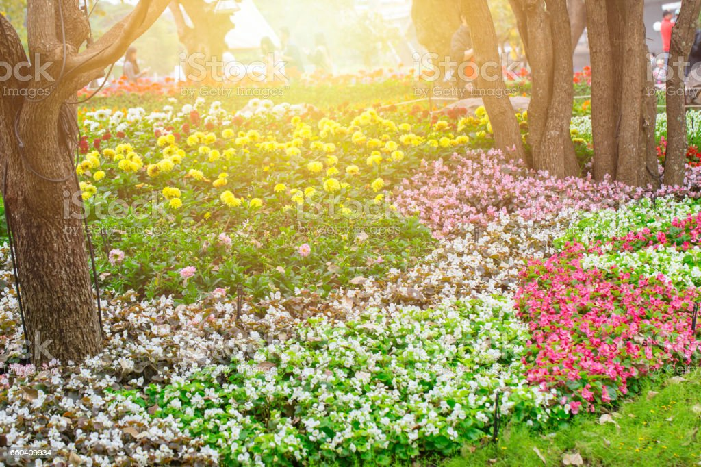 Beautiful flower garden park outdoor with sunlight. stock photo