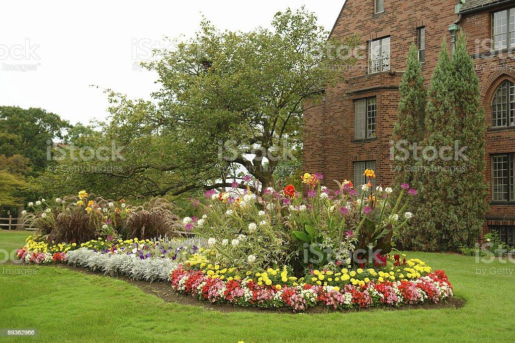 Bellissimi fiori giardino foto stock royalty-free