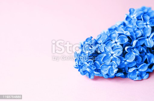 1147995495 istock photo Beautiful flower of classic blue on a pink background. 1193754885