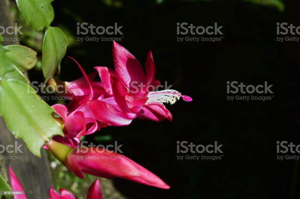 Belle fleur de mai photo libre de droits