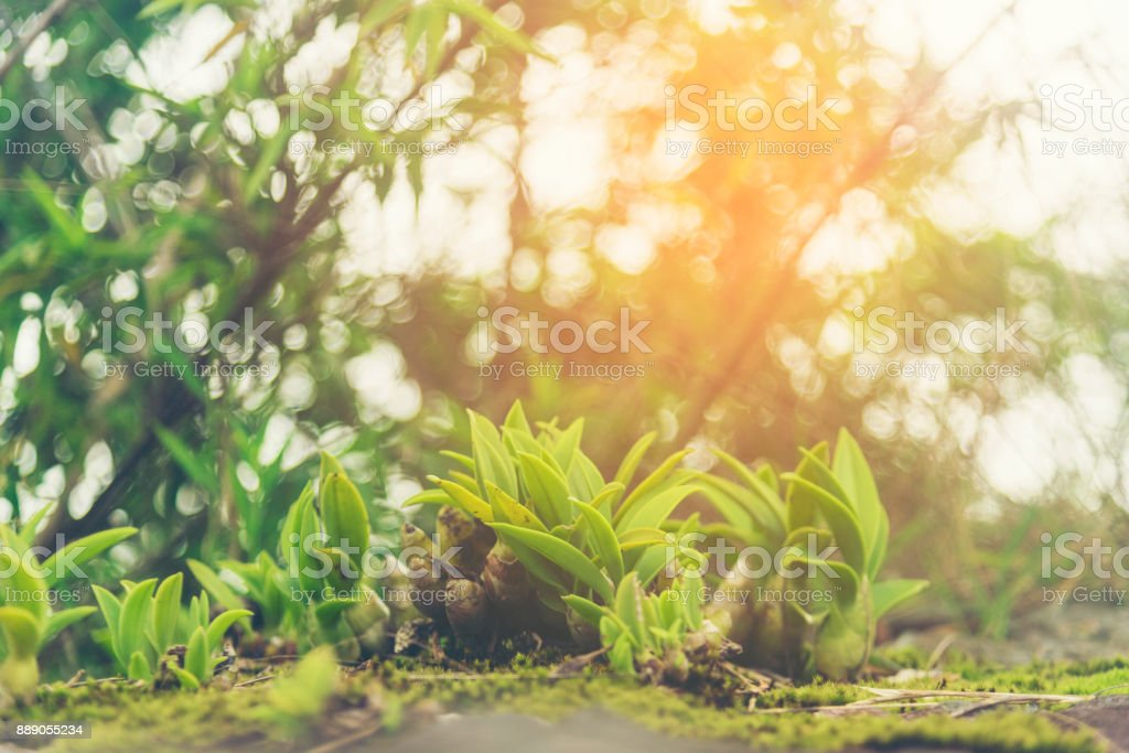 Beautiful Flower Of Tropical Forest The Nature Image Use For