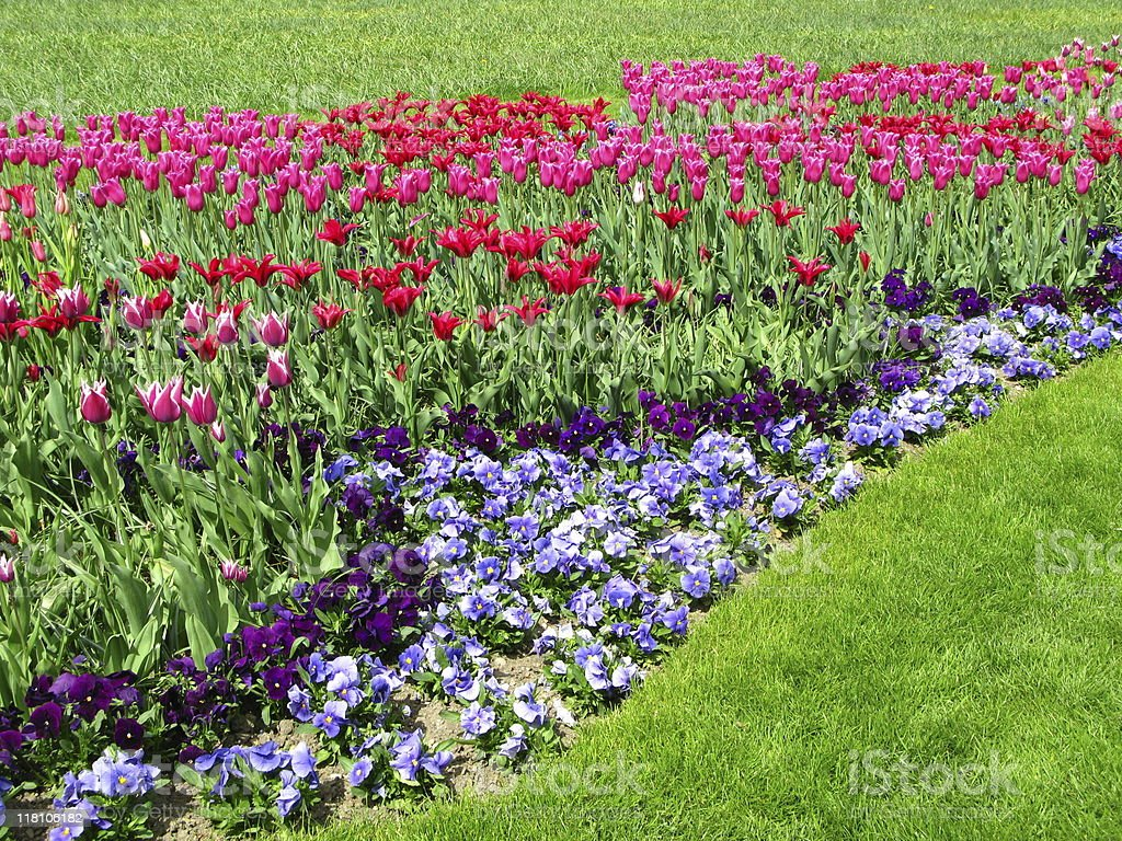 Beautiful Flower Park Insel Mainau Stock Photo More Pictures Of