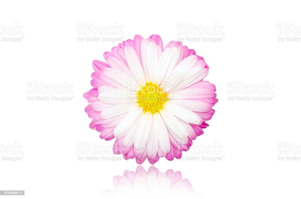 Bela Flor foto de stock royalty-free