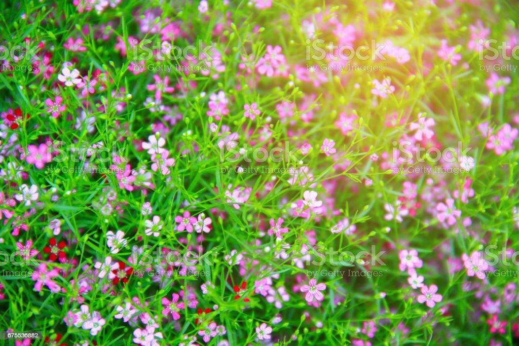 Beautiful flower photo libre de droits