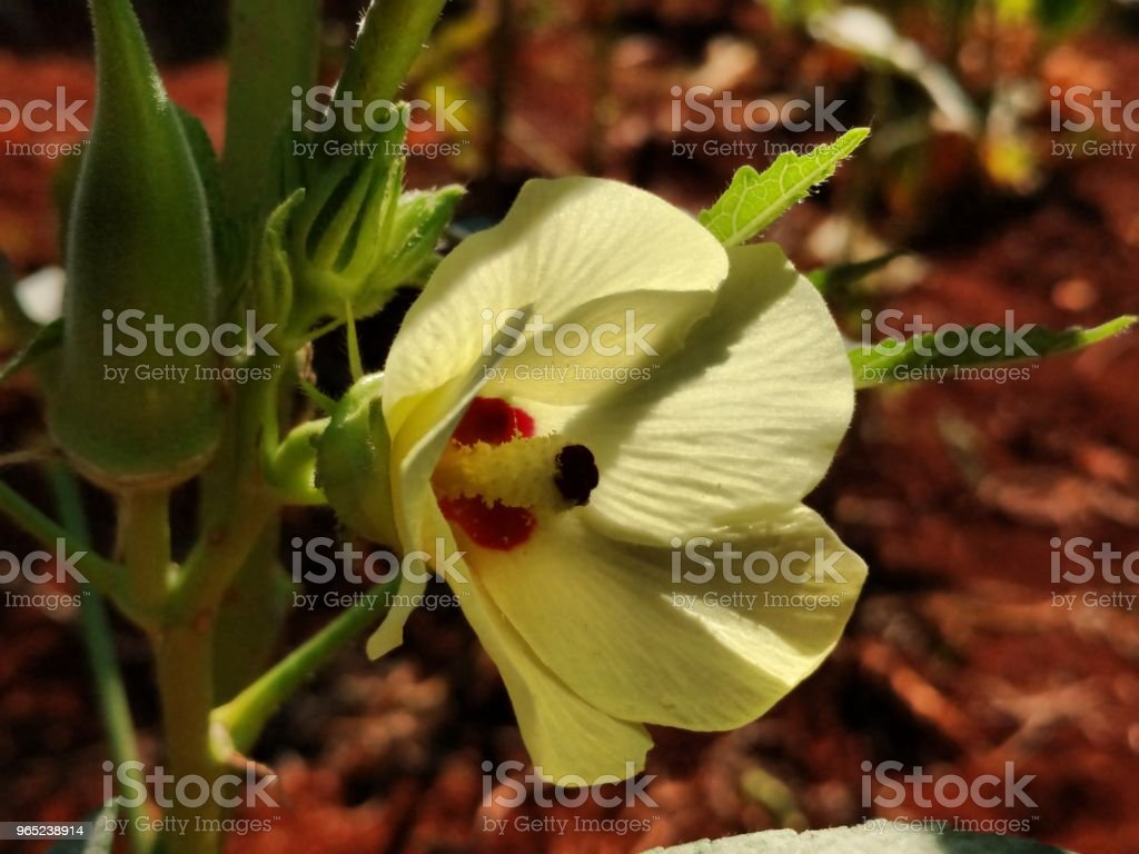 Flor bela royalty-free stock photo