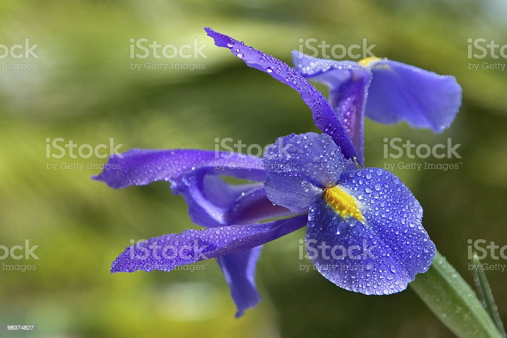 Beautiful flower. royalty-free stock photo