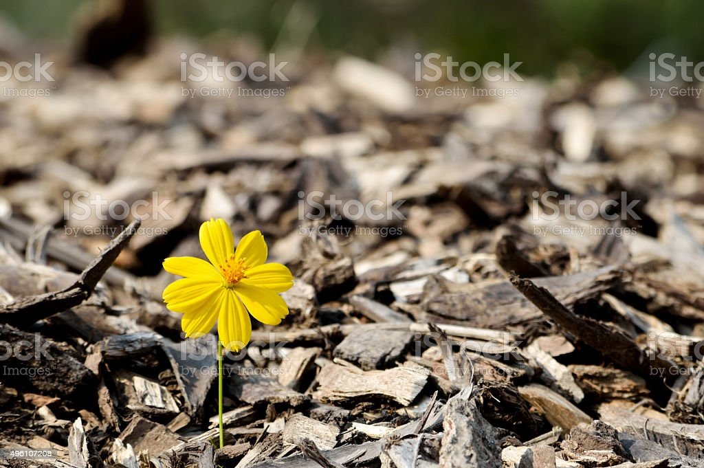 Beautiful flower seedling growing  as a concept of new life stock photo