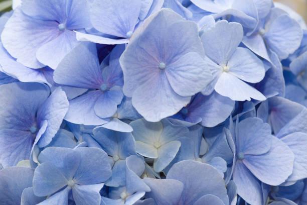 beautiful flower with blue petals – zdjęcie