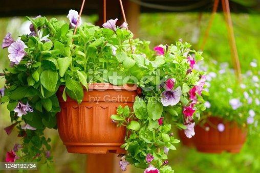 beautiful flowering plants and flowers in flower pots