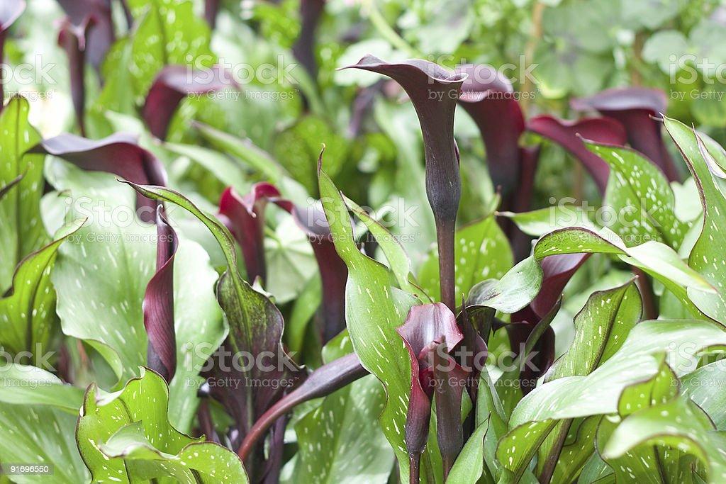 Beautiful flowering plants royalty-free stock photo