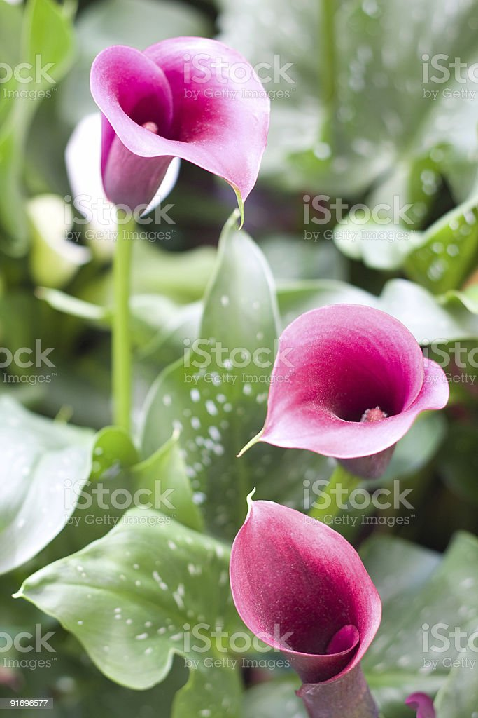 Beautiful flowering plants royalty-free stock photo