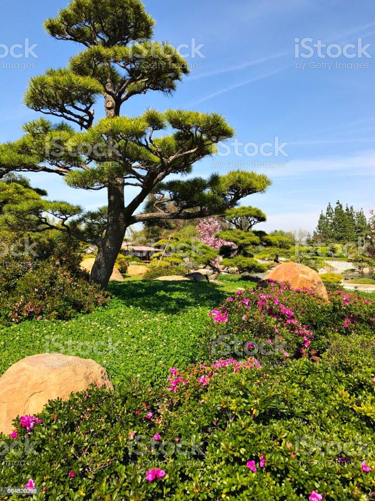 Schöne Blumen Und Bäume Im Japanischen Garten Stockfoto Und Mehr