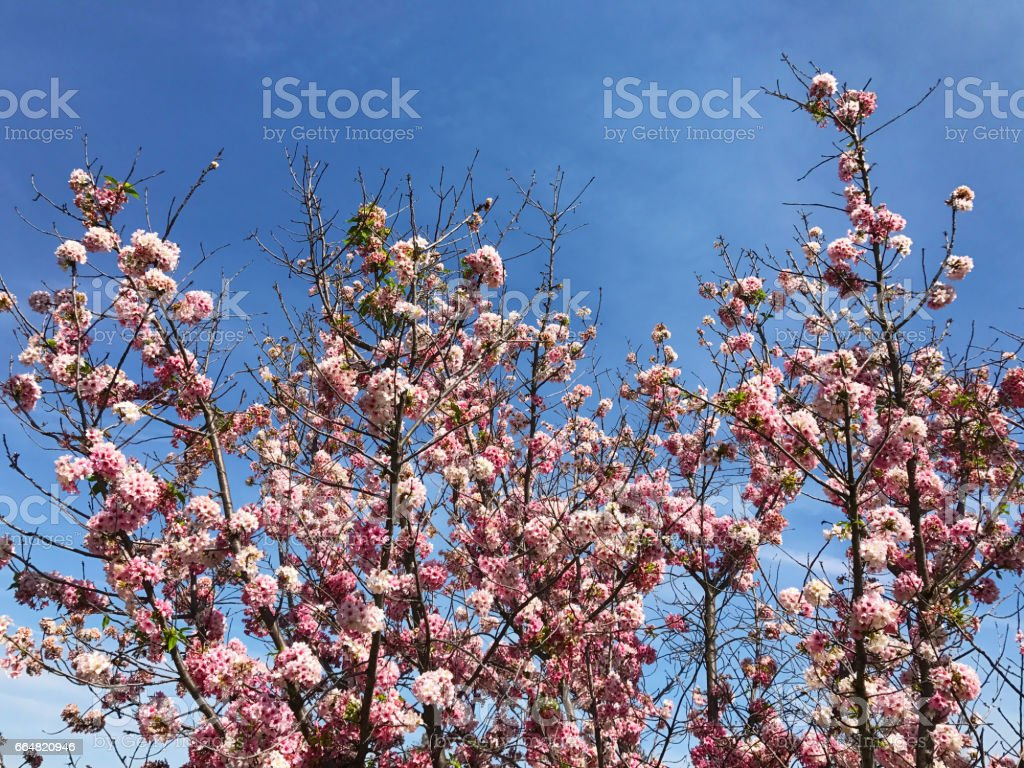 Beautiful Flowers And Trees In Japanese Garden Stock Photo More