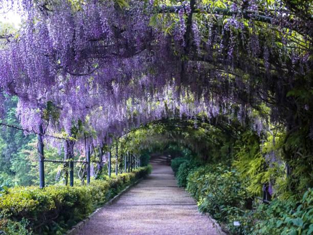 schöne blumen-bereich im park - ferienhaus toskana stock-fotos und bilder