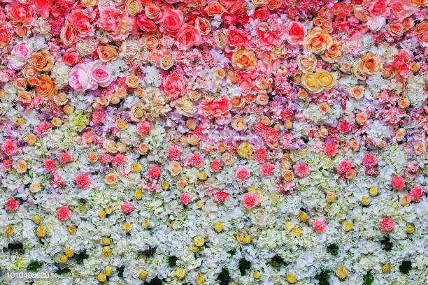 Beautiful flowers background for wedding scene decoration picture id1010408620?b=1&k=6&m=1010408620&s=612x612&h=7slnjiwxvkzmiiw050w l9ulecym8rqn4mfufdb8irm=