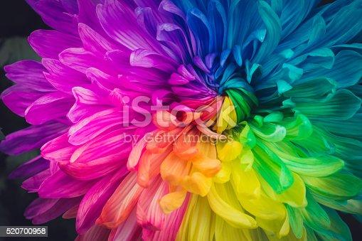 istock Beautiful flowers background 520700958