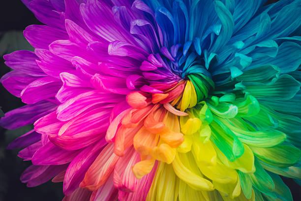 piękne kwiaty tło - jaskrawy kolor zdjęcia i obrazy z banku zdjęć