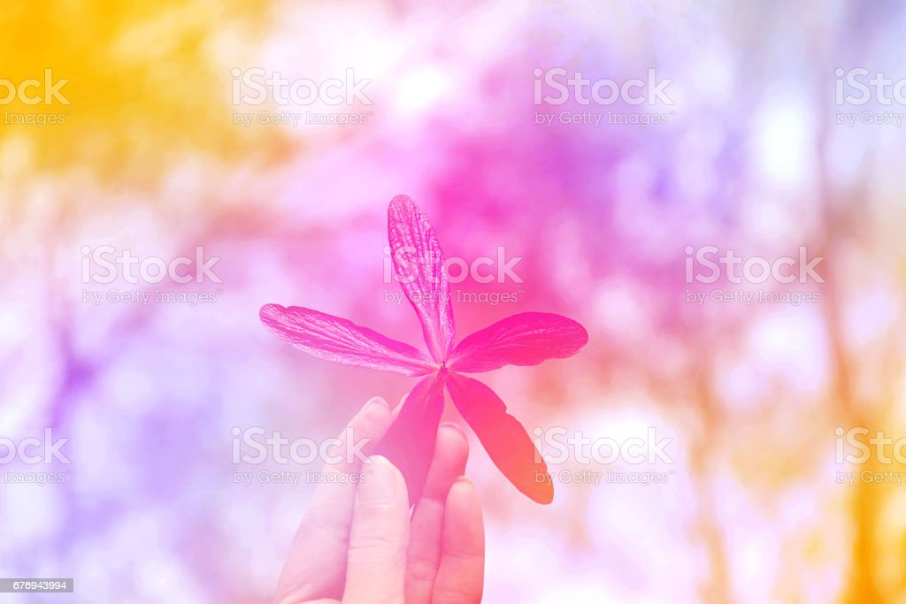 Beautiful flowers blurred background stock photo