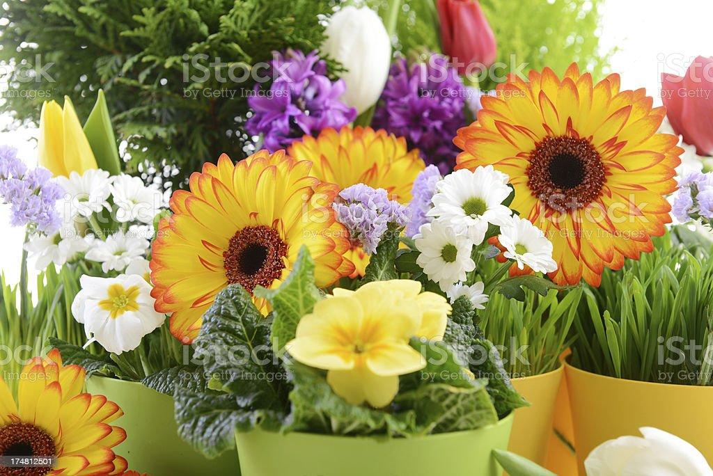 beautiful flowers  close-up royalty-free stock photo