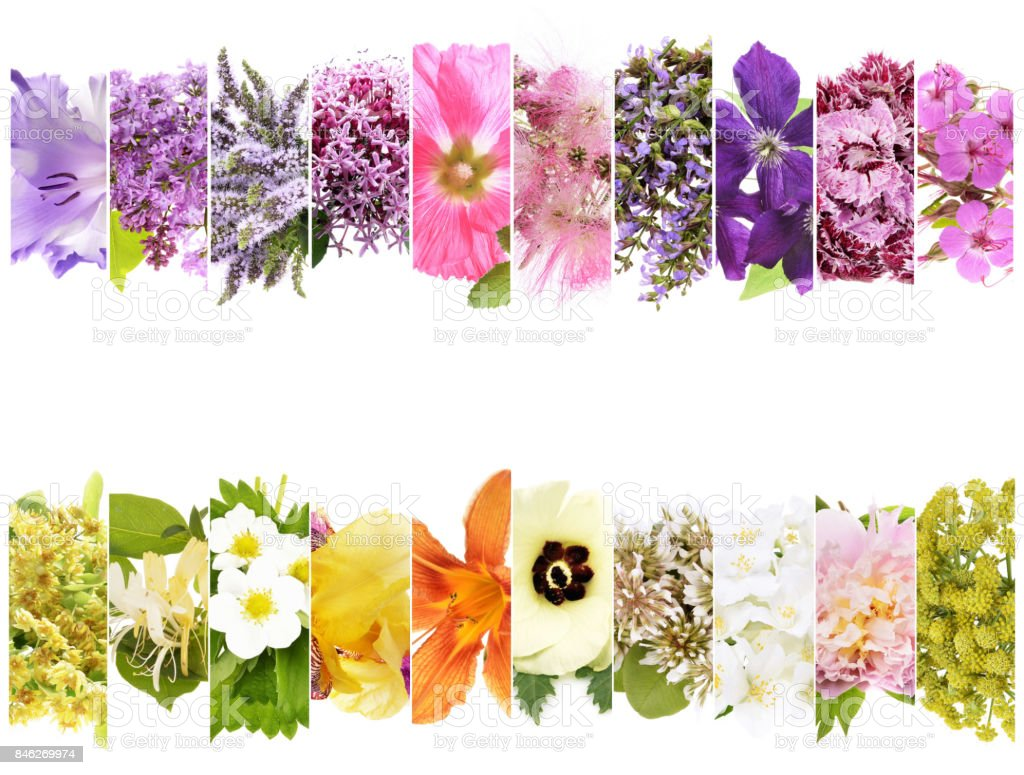 beautiful flowers collage with text stock photo
