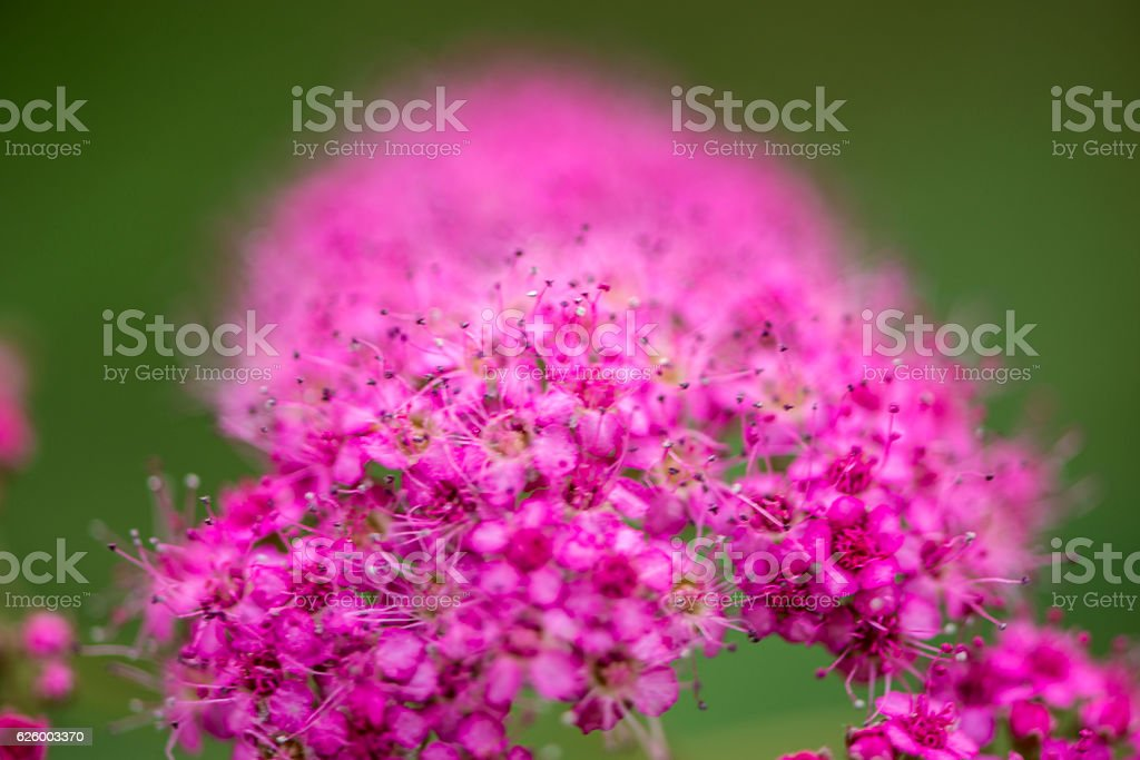 Beautiful flowers for cards and greetings . stock photo