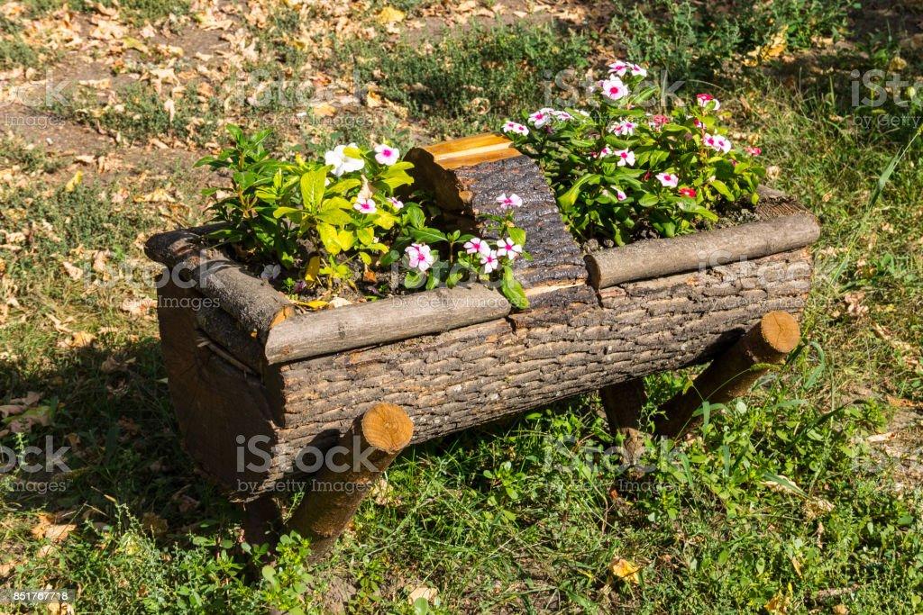 Beautiful Flowers Grows On A Tree Stump Garden Decoration ...