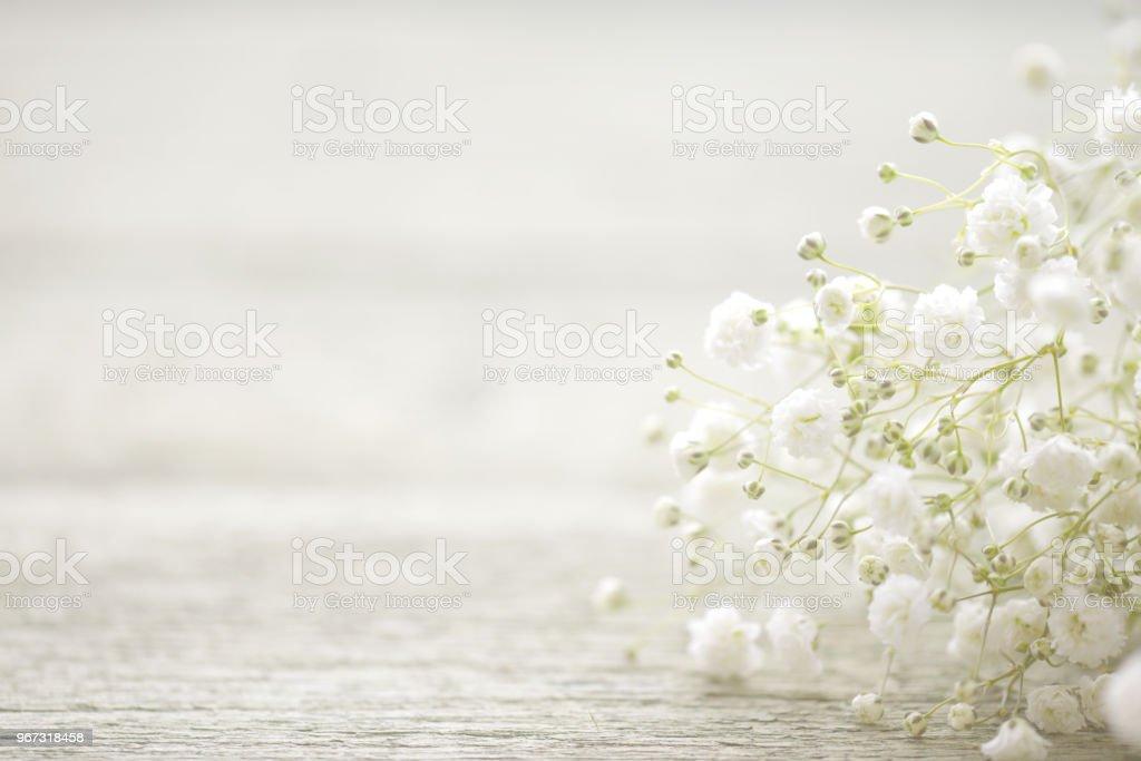 schöne Blumen Schleierkraut – Foto