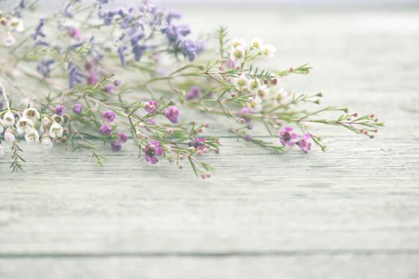 Beautiful flowers heather on wooden background picture id819399858?b=1&k=6&m=819399858&s=612x612&w=0&h=javo3izdfriznttygrcuszd52kmyelsjpmcodci7myu=