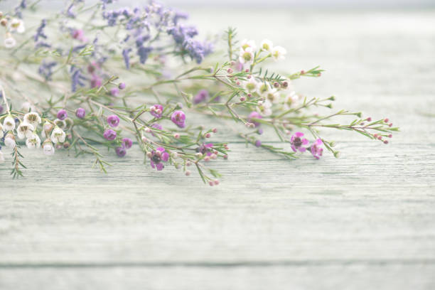 schöne blumen heidekraut auf hölzernen hintergrund - holzblumen stock-fotos und bilder