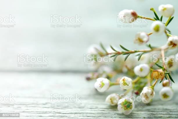 Beautiful flowers heather on wooden background picture id820716638?b=1&k=6&m=820716638&s=612x612&h=skpsy6nnikibcte8nde1cz1ml1vclcnajywzjykrcgq=