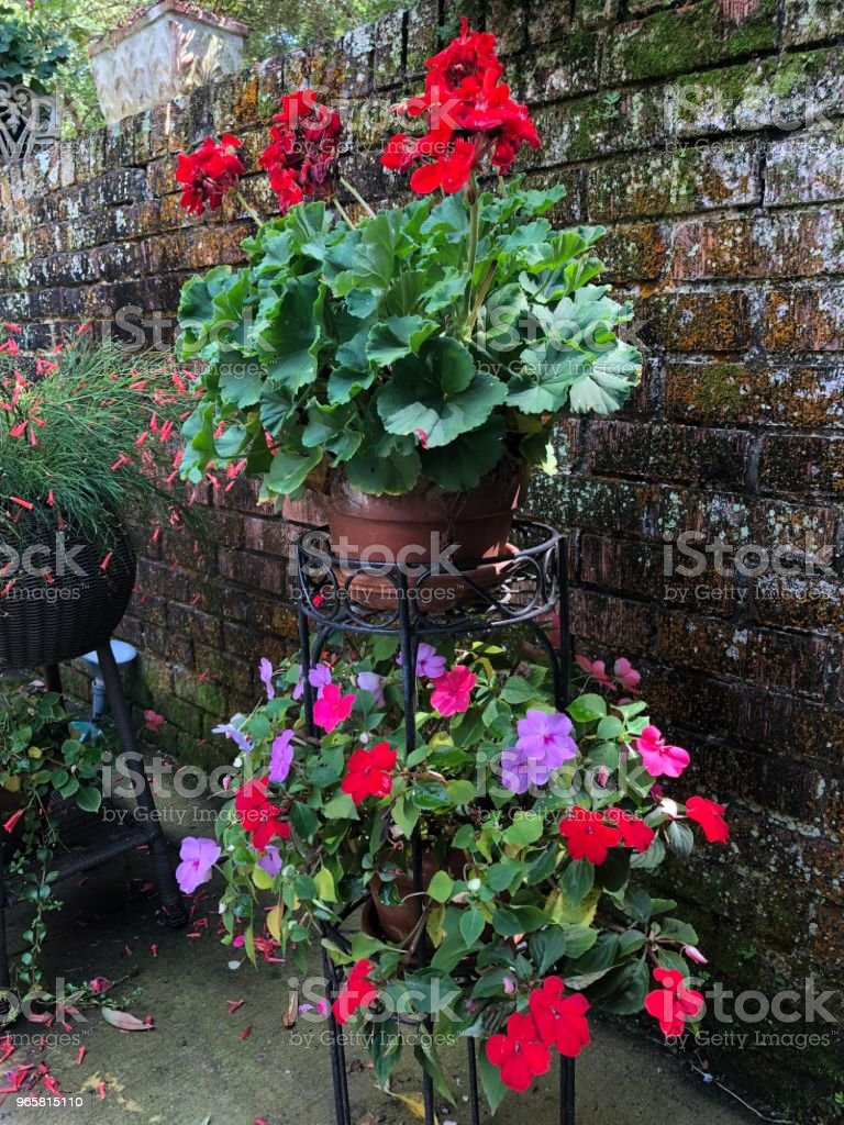 Mooie bloemen in manden - Royalty-free Asteroideae Stockfoto