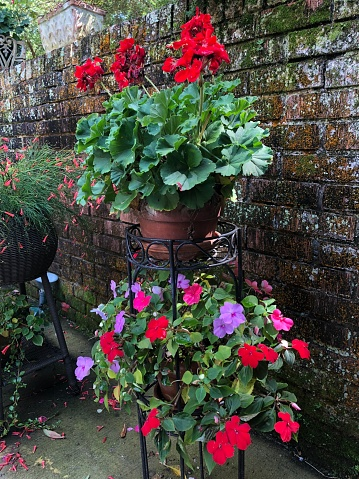 Mooie Bloemen In Manden Stockfoto en meer beelden van Asteroideae