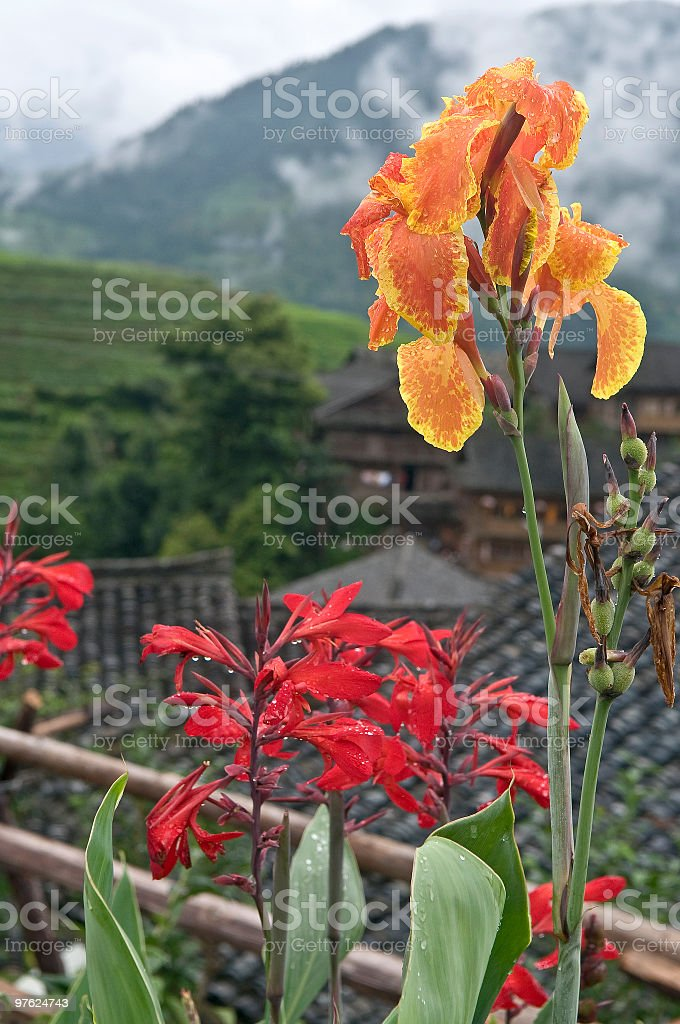 Beautiful Flowers in Chinese Vilage royalty-free stock photo